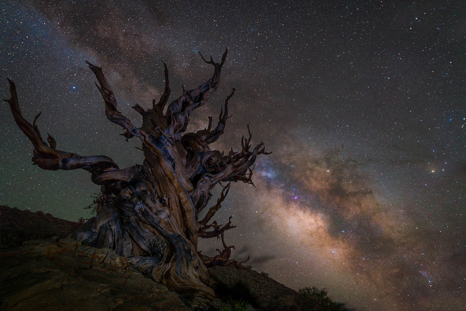 Image of ancient tree with the Milky Way in the background