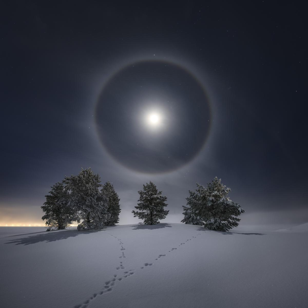 A bright full moon shines over fir trees in the snow