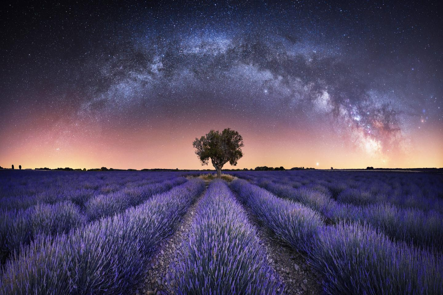 Milky Way stretching over lavender fields in France