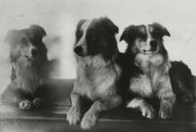 Captain Woodget's Dogs © Cutty Sark Trust