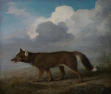 National Maritime Museum George Stubbs Dingo
