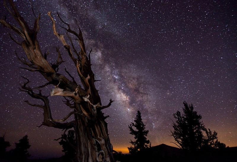 A night skyscape with a beautiful deep purple sky and bright clouds of stars. Bare wooden branches are silhouetted in the foreground